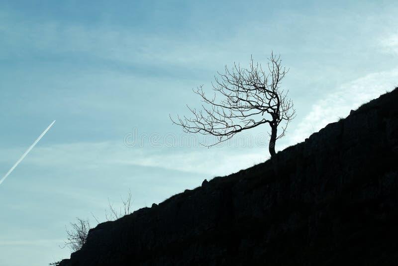 Vinterträd på den Malham lilla viken arkivfoton