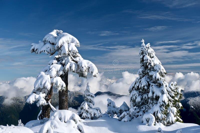 Vinterträd som täckas med insnöade berg ovanför moln royaltyfri foto