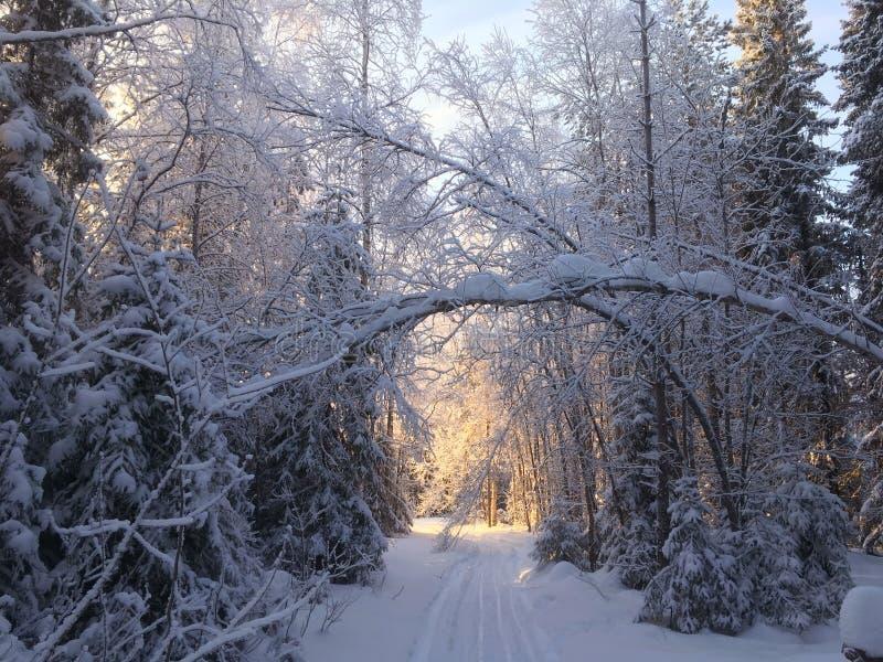 Vinterträdet fodrade vägen med snö och den skinande solen arkivbilder