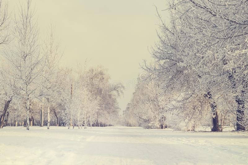 Vinterträdgränd royaltyfri foto