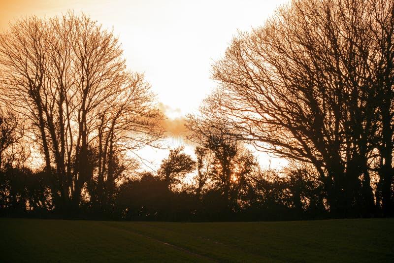 Vinterträdkontur och inställningssol i jordbruksmark nära Bexhill i East Sussex, England fotografering för bildbyråer