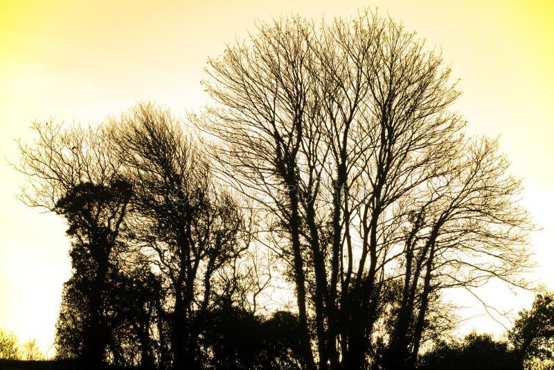 Vinterträdkontur och inställningssol i jordbruksmark nära Bexhill i East Sussex, England arkivfoton