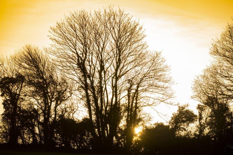 Vinterträdkontur och inställningssol i jordbruksmark nära Bexhill i East Sussex, England arkivbilder