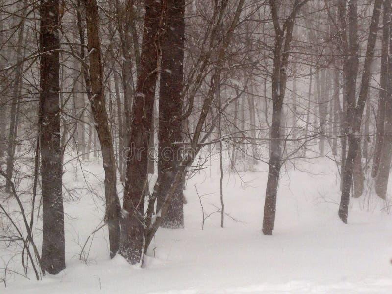 Vinterträn arkivbilder