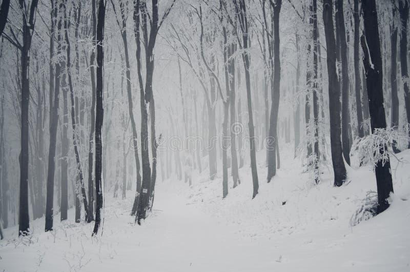 Vinterträn med snö royaltyfri bild
