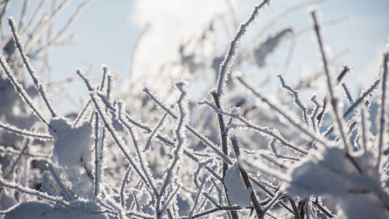 Vinterträn på en Sunny Day arkivbilder
