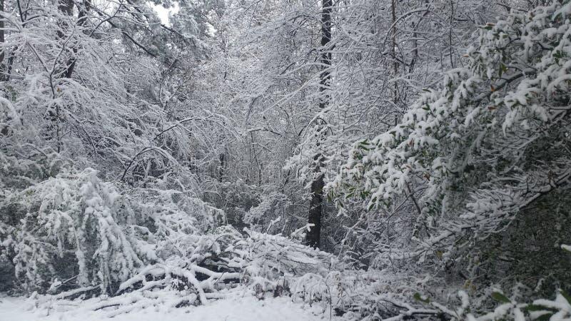 Vinterunderland arkivbilder