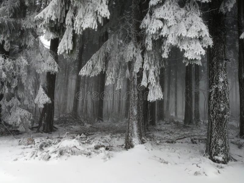Vinterunderland royaltyfria foton