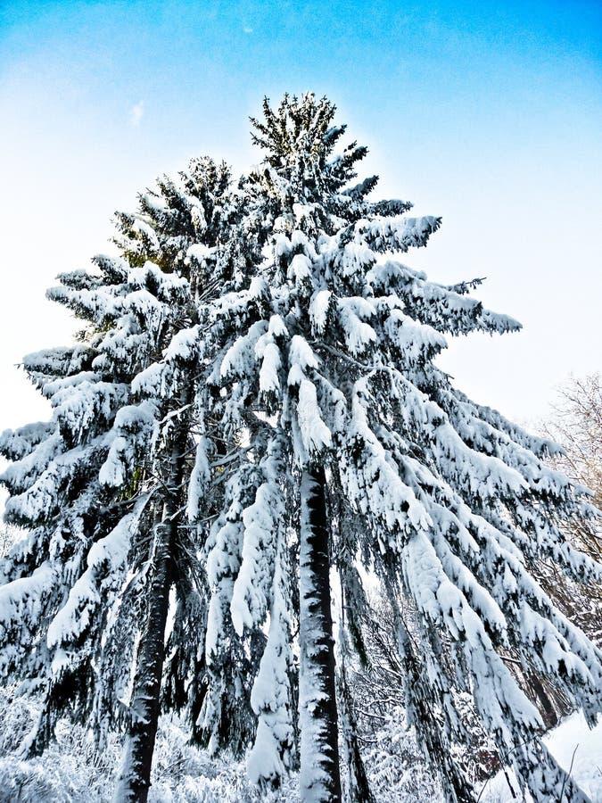 Vinterunderland royaltyfri foto