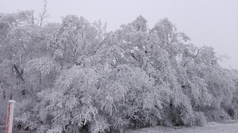 Vinterunderland 5 royaltyfri bild