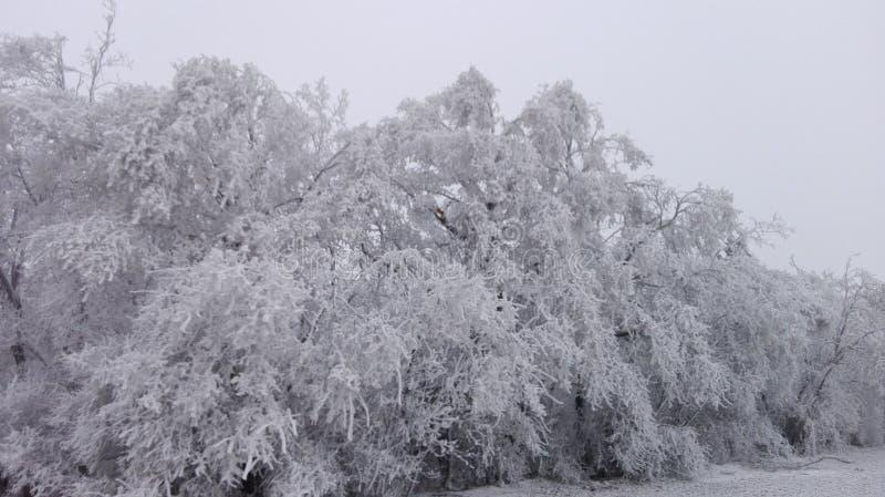 Vinterunderland 19 royaltyfri foto