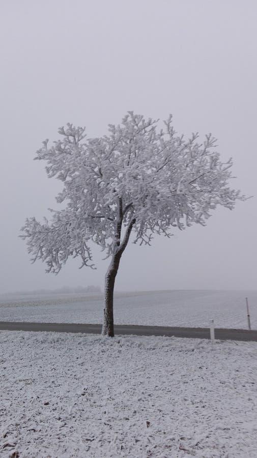 Vinterunderland 15 arkivfoto