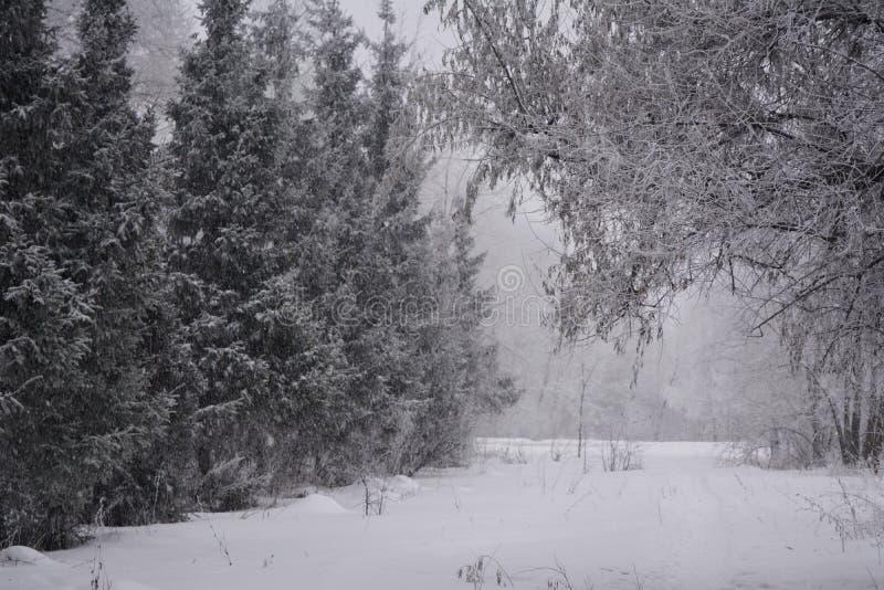Vinterunderland i ett blandat skogsnöfall i molnig dag royaltyfria foton