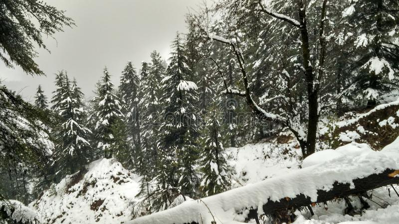 Vinterunderland/Snowcapped skog royaltyfri fotografi