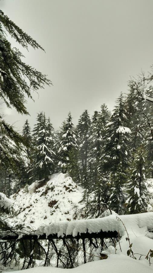 Vinterunderland/Snowcapped skog arkivfoto
