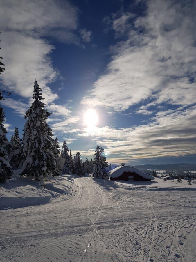 Vinterunderland solig dag i skidåkningslingan för argt land royaltyfri fotografi