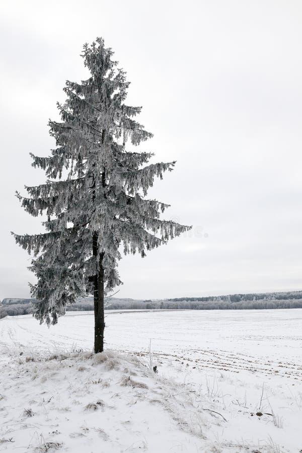 Vinterväder arkivbilder