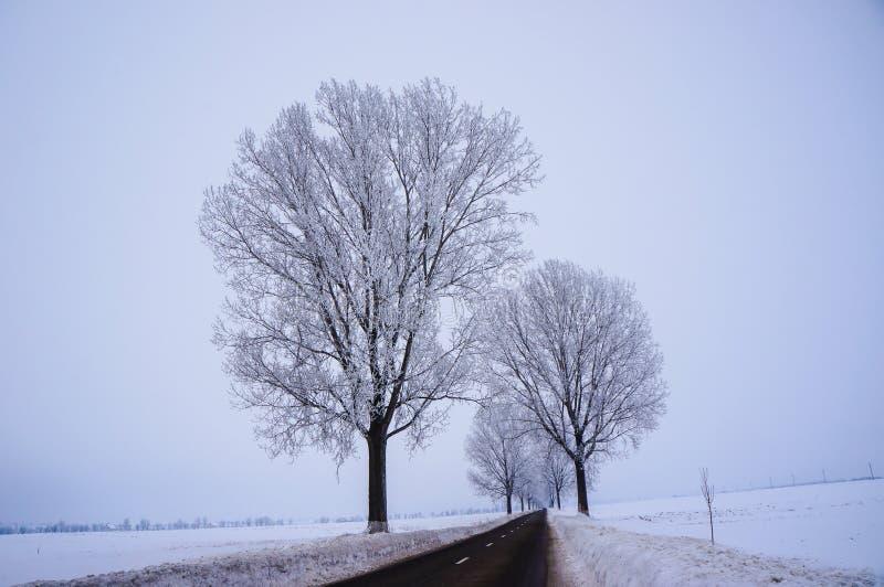 Vinterväg arkivfoton