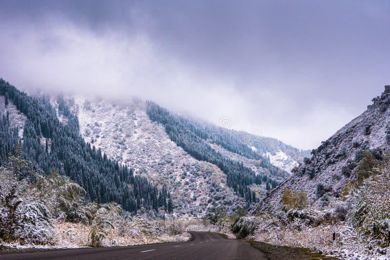 Vinterväg i bergen Passform-träd skog som täckas i dimma mis royaltyfria bilder