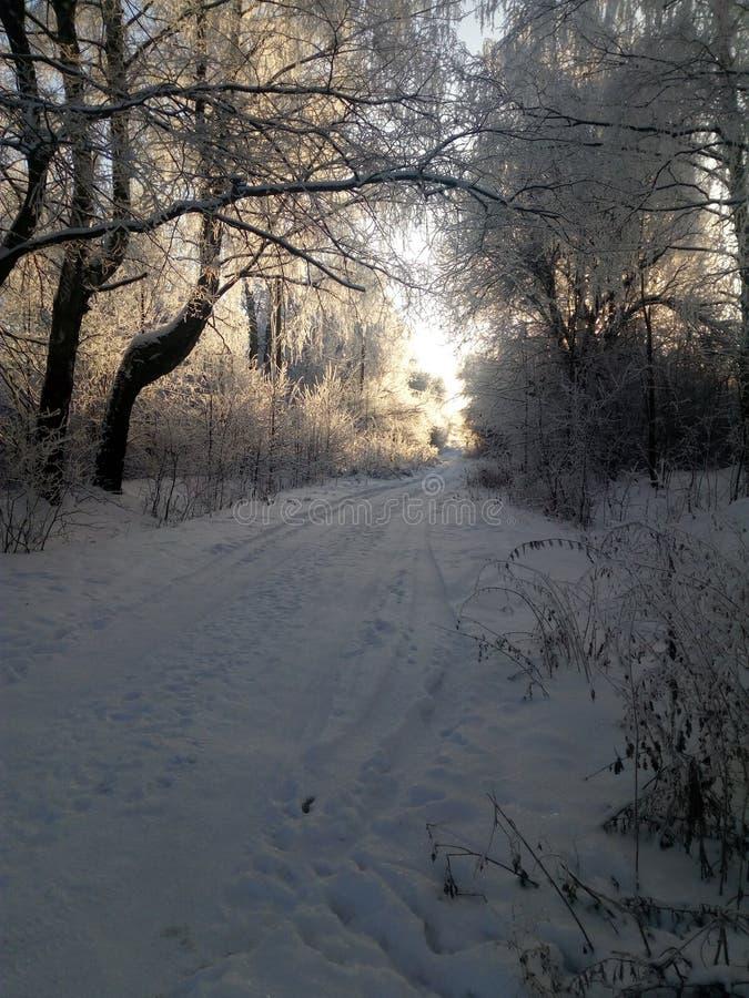 Vinterväg i bygden på gryning arkivfoto