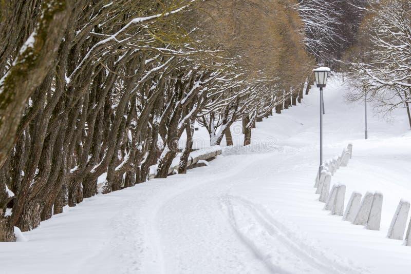 Vinterväg i parkera arkivfoto
