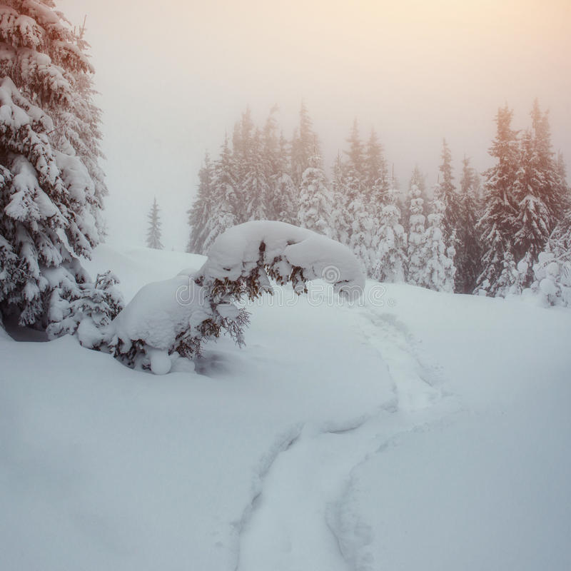 Vintervägen arkivbilder