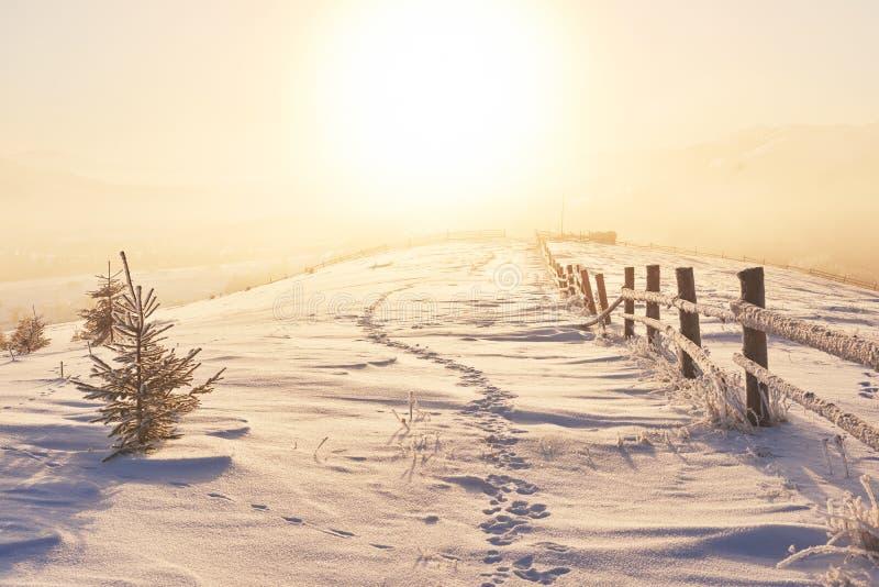 Vintervägen dramatisk plats Carpathian Ukraina arkivfoto