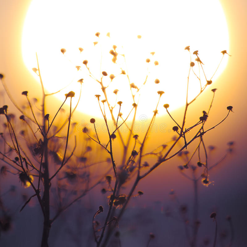 Vinterväxtkontur på solnedgången royaltyfria bilder