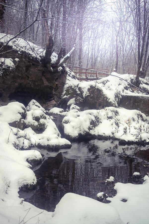 Vintervår i den djupa skogen royaltyfri foto