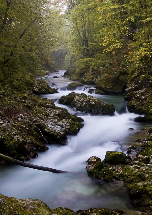 vintgar的斯洛文尼亚 免版税库存图片