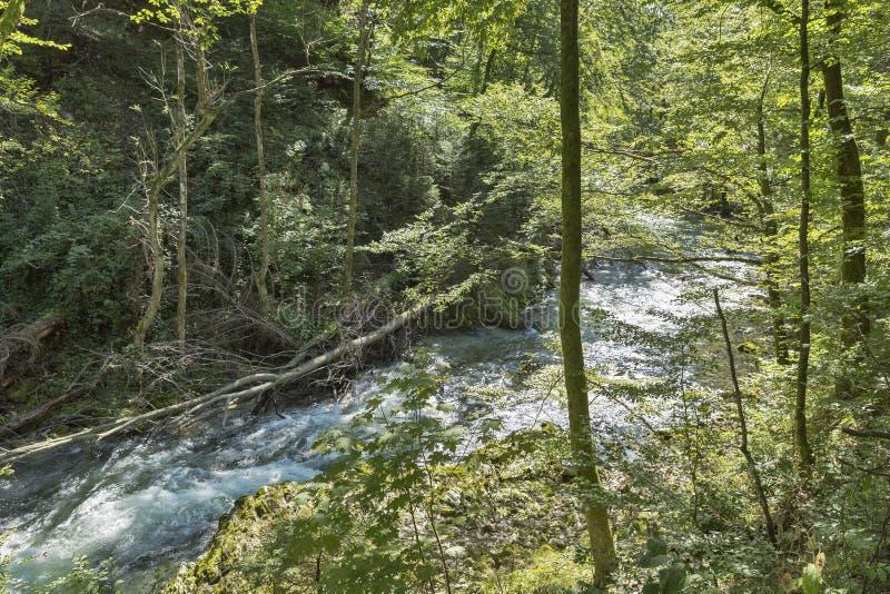 Vintgar-Gebirgsschlucht und Fluss Radovna Verlaufen, Slowenien lizenzfreies stockfoto