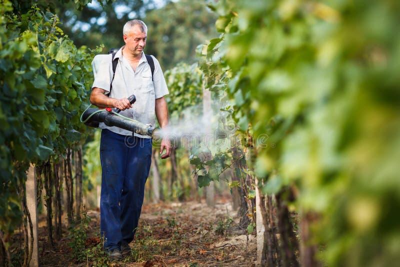 Vintner in his vineyard spraying chemicals. Vintner walking in his vineyard spraying chemicals on his vines stock photos