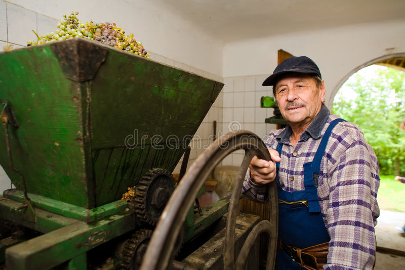 Vintner pressing grapes royalty free stock photography