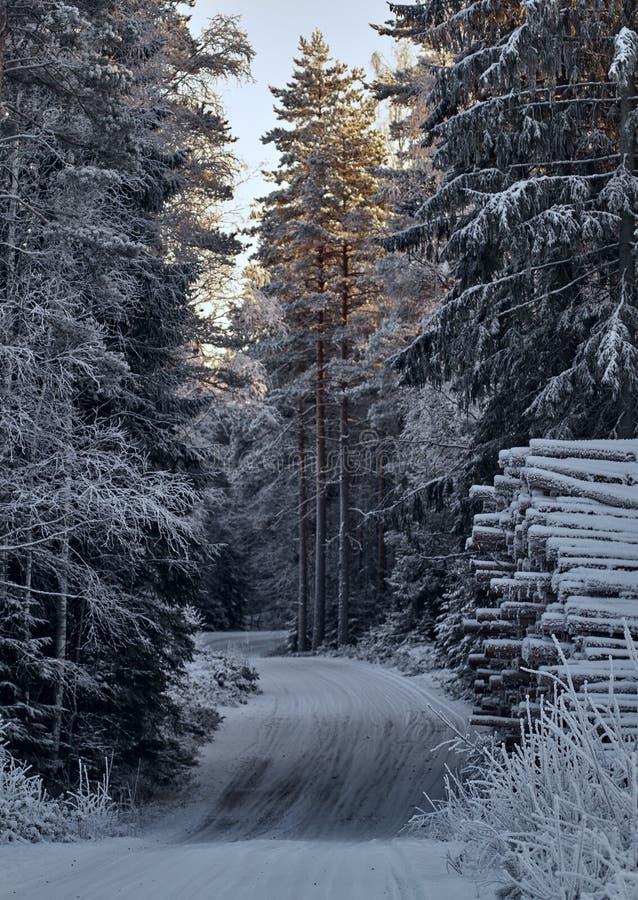 Vintriga Forest Road royaltyfri bild