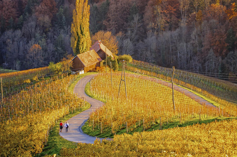 Vinväg och vingårdar i formen av en hjärta med två fotgängare arkivfoton
