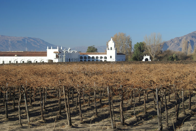 Vinyard. From cafayate valley in salta argentina stock photography