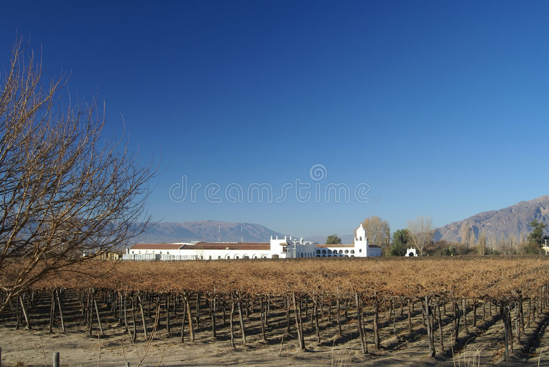 Vinyard. And old factory from cafayate valley stock photography
