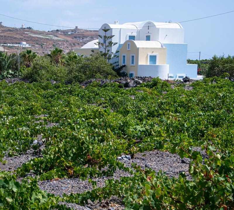 Vinyard with apstel house. A house painted in pastel colours in a Greek vinyard on Santorini stock images