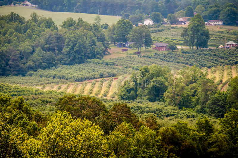 Vinyard in a distance. Of virginia mountains stock images