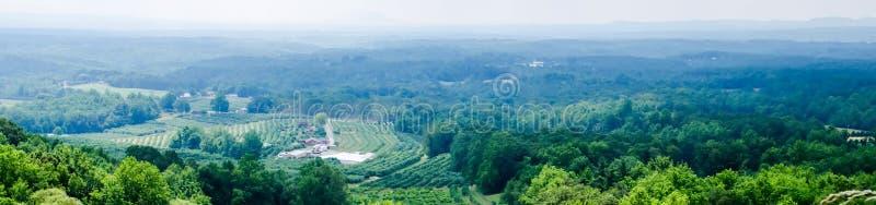 Vinyard in a distance of virginia mountains stock photos