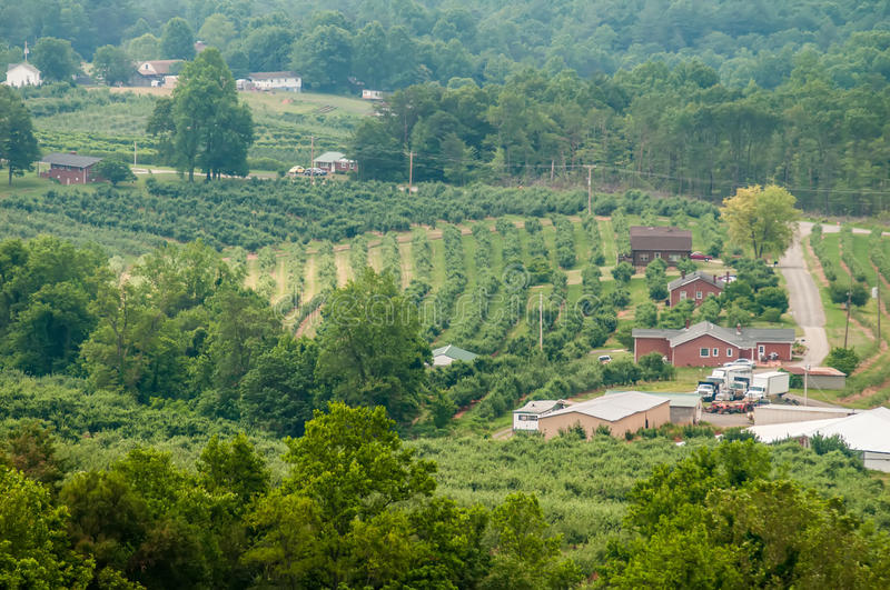 Vinyard in a distance of virginia mountains. In summer royalty free stock photos