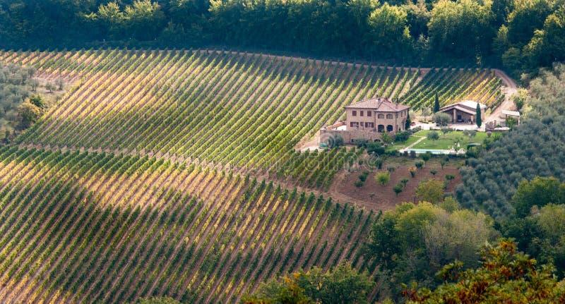 Vinyard med huset Tuscany, Italien fotografering för bildbyråer