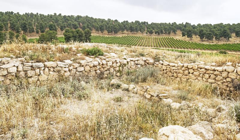 Vinyard near the Ruins of an Ancient Synagogue in Israel. A vinyard in the Yatir Forest in Israel with the ruins of the Anim synagogue in the foreground royalty free stock image