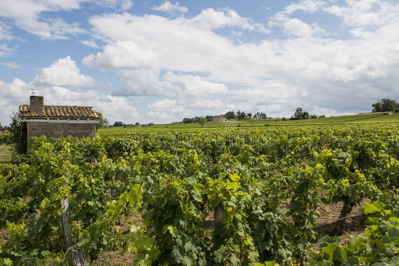 Vinyard at Saint-Emilion with House. Vinyard at Saint-Emilion in France with small house in a vineyard and white clouds stock photography
