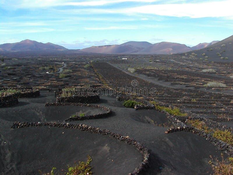 Lanzarote Vinyard. A vinyard in the volcanic ash of Lanzarote royalty free stock photo