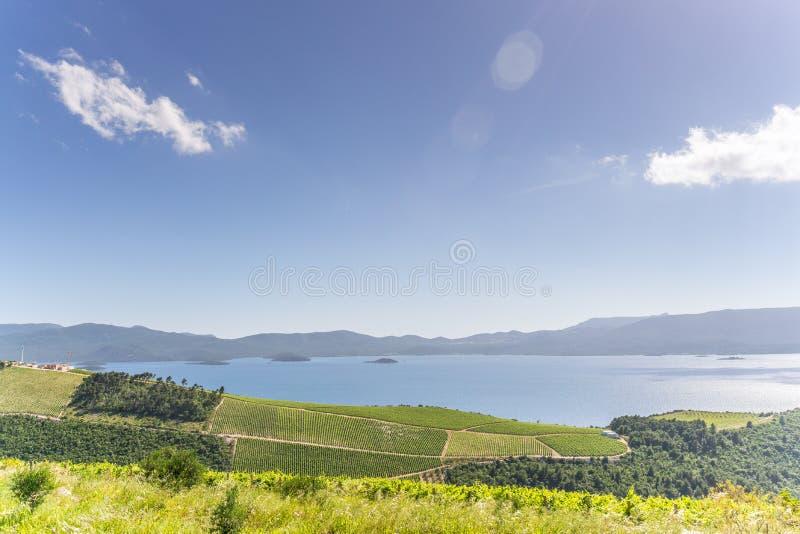 Download Vinyards на хорватском побережье Стоковое Изображение - изображение насчитывающей европа, хорватия: 81809651