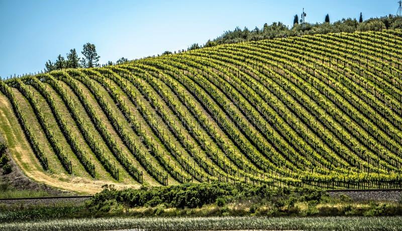 Vinyards de Sonoma e de Napa Valley em Califórnia foto de stock