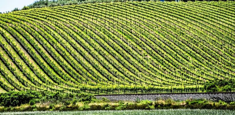 Vinyards de Sonoma e de Napa Valley em Califórnia imagens de stock royalty free