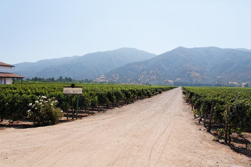Vinyeard au Chili photo stock