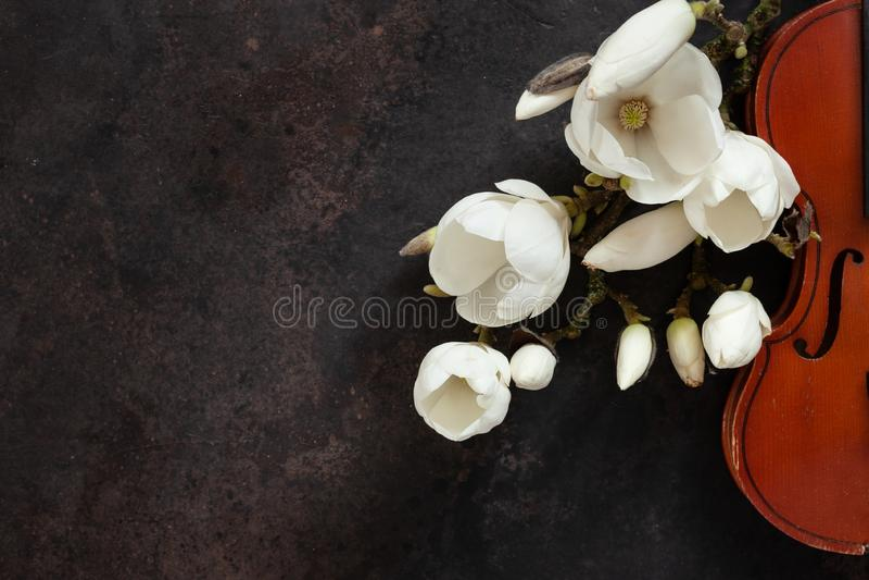 Violín viejo y brances florecientes de la magnolia Visi?n superior, primer en fondo oscuro del vintage fotos de archivo libres de regalías